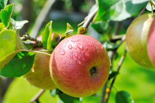 Saison Obst und Gemüse