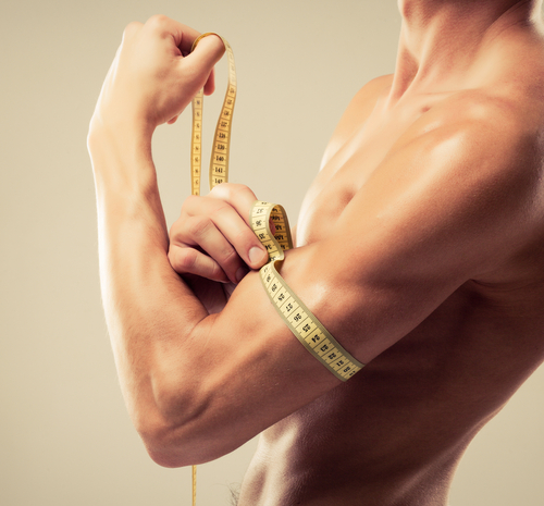 Muskeln sorgen für eine langes Leben