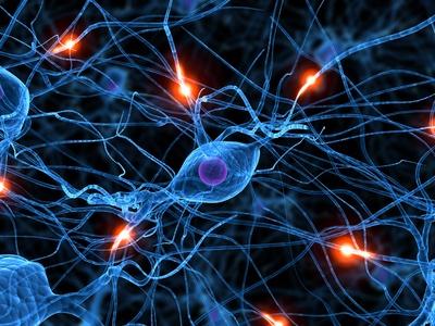 nervenzelle, stimuliert durch Hormone