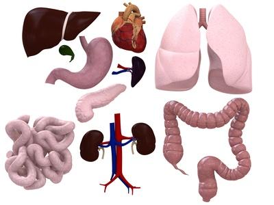 Verschiedene Organe