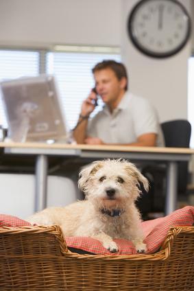 Hund in einem Büro