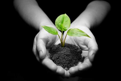 Pflanze in einer Hand