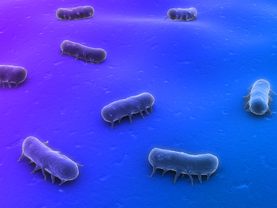 salmonellen bakterien