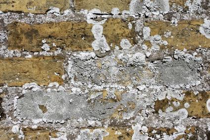 Backsteinwand mit Schimmel © ogressie - Fotolia.com