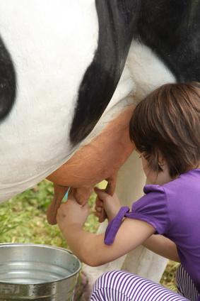 Kind melkt eine Kuh