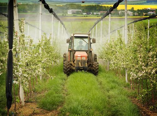 Obst Pestizide